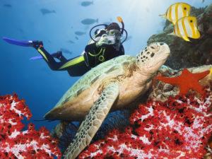 Scuba diver taking a photo of a sea turtle.